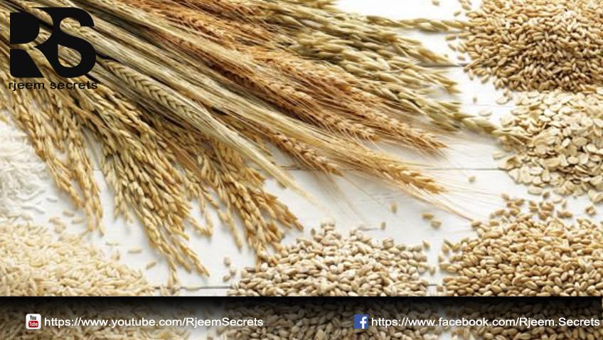 الحبوب الغلالية