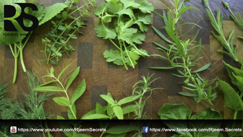 الأعشاب الصحية 2