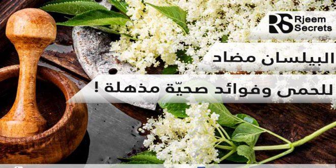 فوائد البيلسان : زهورها، ثمارها وأورقها فوائد مذهلة